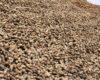 Harga Kacang Tanah Terbaru