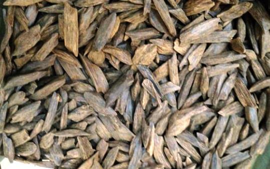 Hasil gambar untuk kayu gaharu